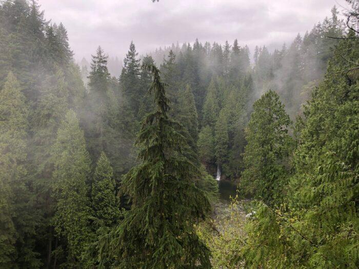 utsikt över Capilano River Canyon.