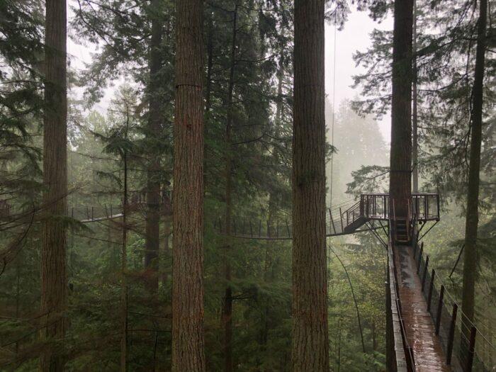 Promenadbroar högt upp i träd