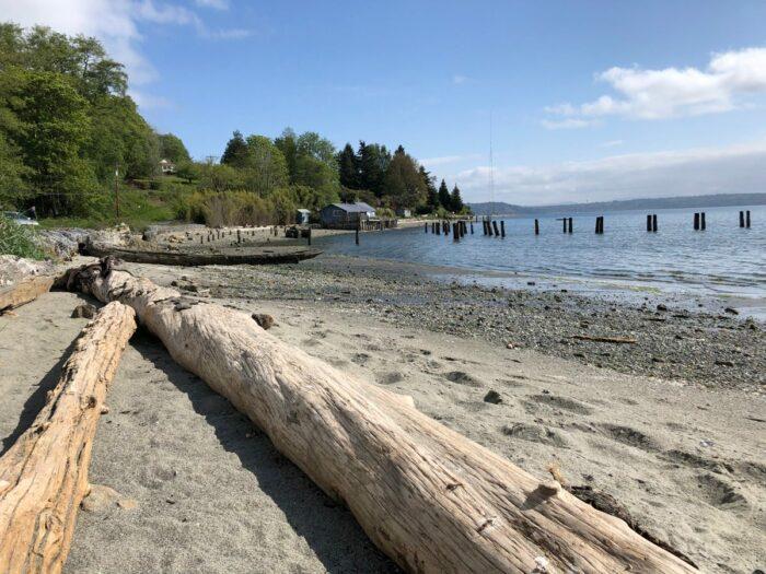 Strand med trädstockar