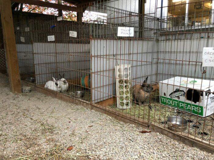 Kaniner i burar utomhus