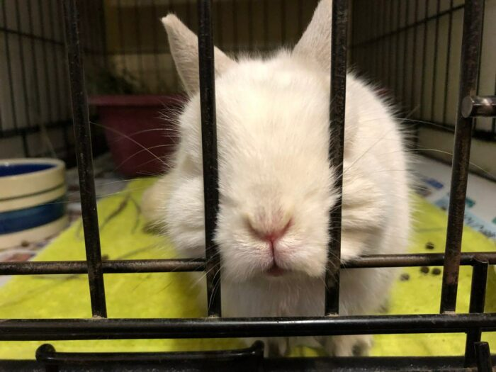 Liten vit kanin som heter Damien