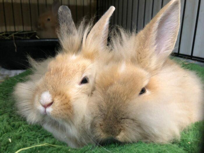 Två kaniner myser tätt ihop