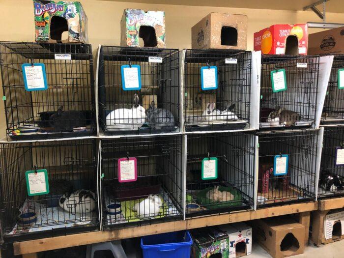 Burar med kaniner i ett skjul