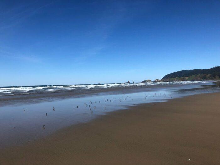 Småfåglar som letar efter mat i sanden