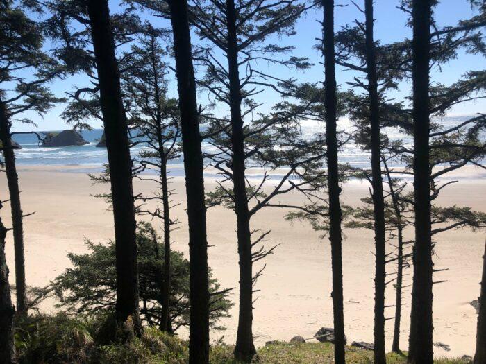 Träd framför strand